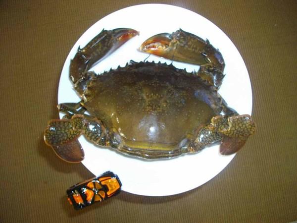 090412_crab