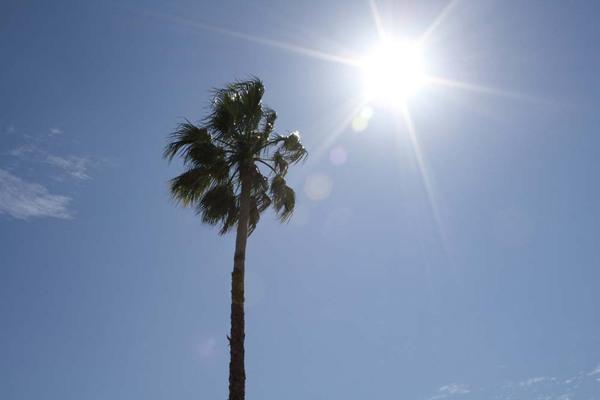 Palm_sun