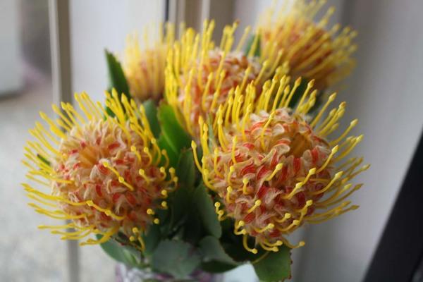 Australiannativeflower