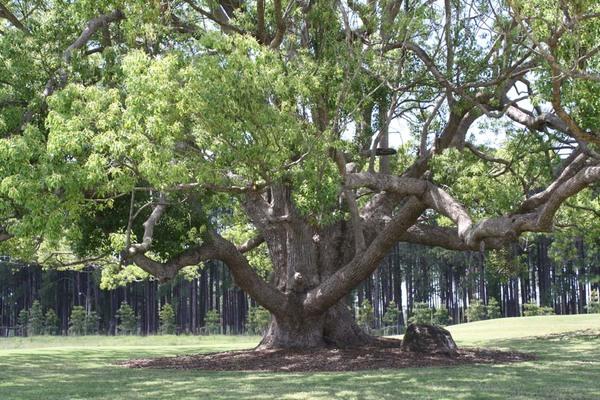 Tree_sanctury