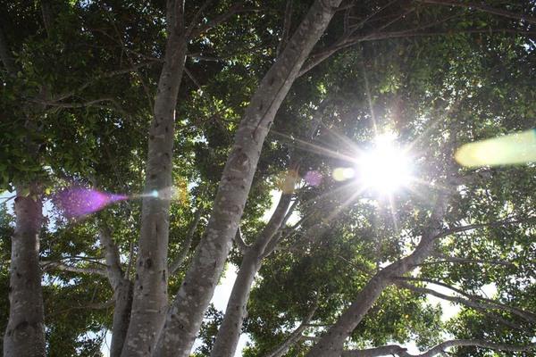 Tree_sun_sanctuary